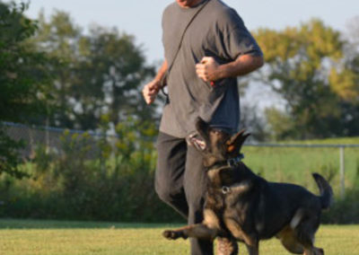 Dog Training Unleashed-33